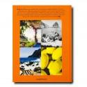 Livre Capri Dolce Vita Assouline