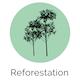 reforestation meuble